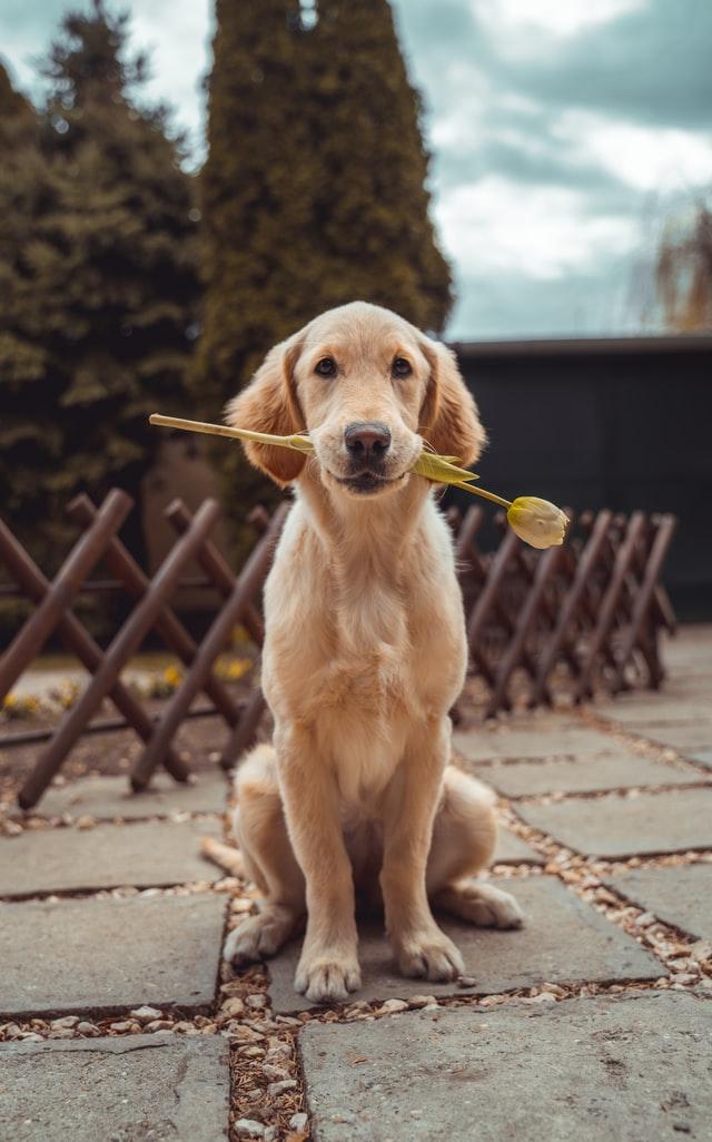 Deine Haustiere und ihre Nahrung